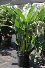 Quality Plant Material At Our Garden Center Southwest Ranches Great Prices