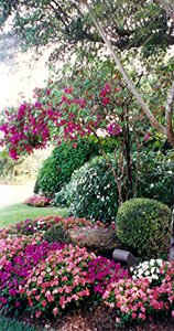 Creating Beautiful Landscapes For Commercial And Residential Clients Southwest Ranches South