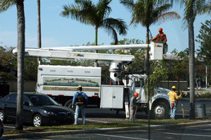 Comprehensive Commercial And Residential Landscape Maintenance Services In South Florida